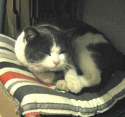 Il coccolone gatto botero cerca una famiglia che lo accolga - Botero il bagno ...